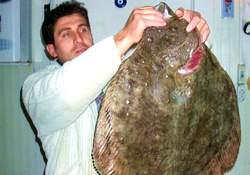 Kalkan balıkları yuvaya akın etti!