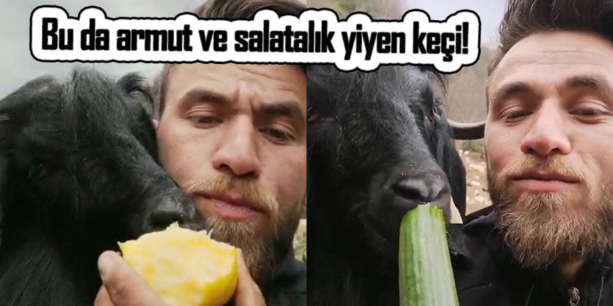 Bu da keçinin salatalık ve armut yiyeni!