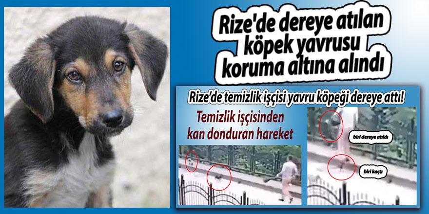 Rize'de dereye atılan köpek yavrusu koruma altına alındı