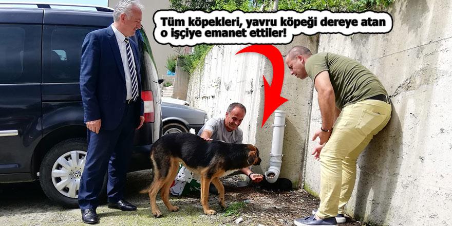 Tüm köpekleri, yavru köpeği dereye atan işçiye emanet ettiler!