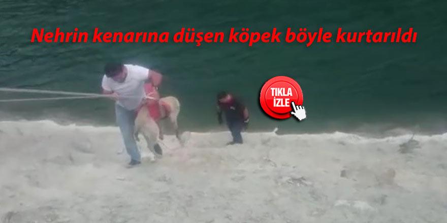 Nehrin kenarına düşen köpek böyle kurtarıldı