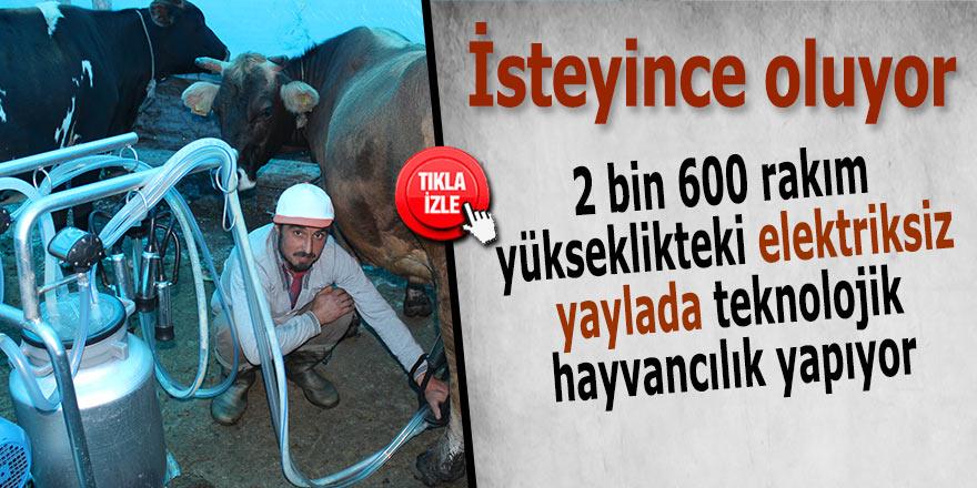 2 bin 600 rakım yükseklikteki elektriksiz yaylada teknolojik hayvancılık