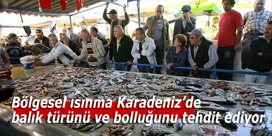 Bölgesel ısınma Karadeniz'de balık türünü ve bolluğunu tehdit ediyor