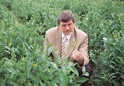 Çaykur, 217 bin ton çay aldı