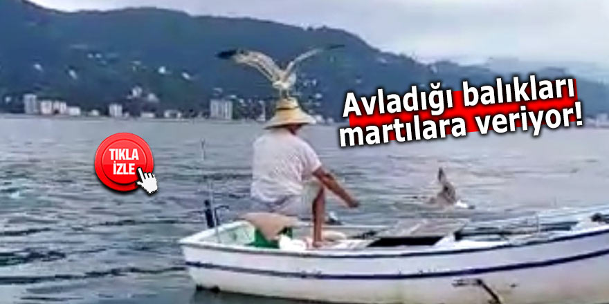 Avladığı balıkları martılara veriyor!
