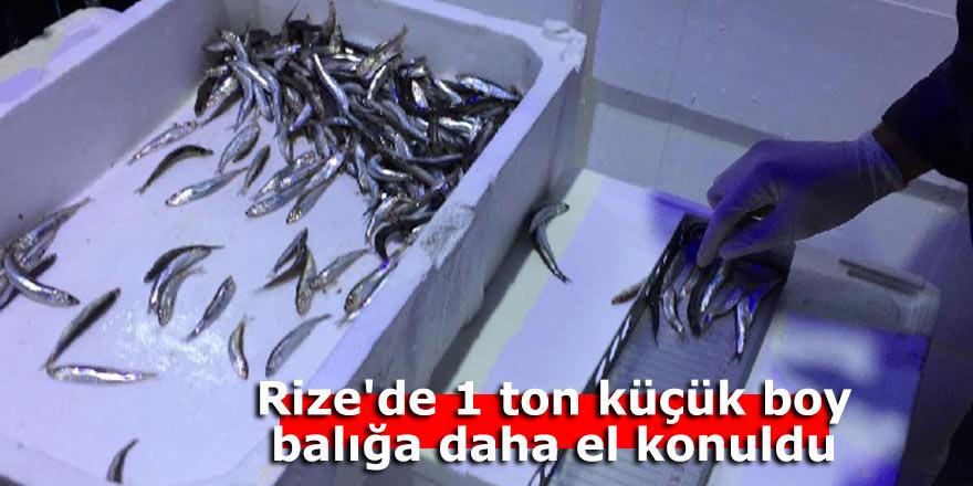 Rize'de 1 ton küçük boy balığa daha el konuldu