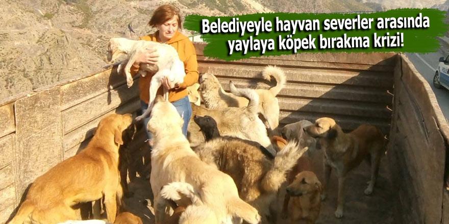 Belediyeyle hayvan severler arasında yaylaya köpek bırakma krizi!