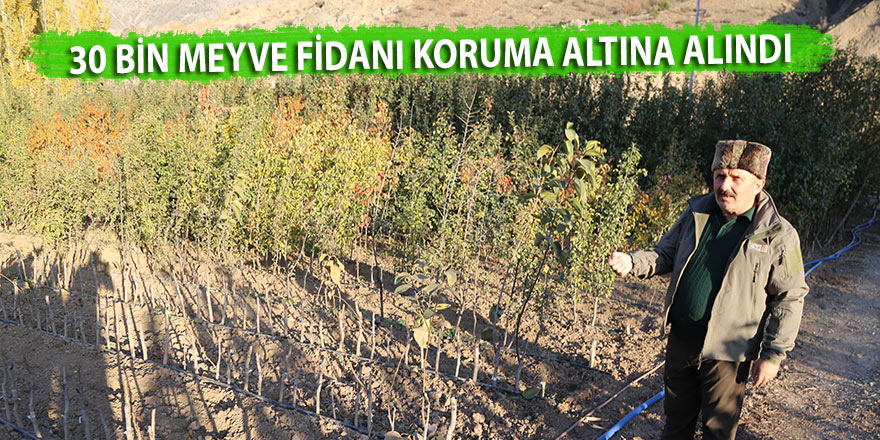 30 bin meyve fidanı koruma altına alındı
