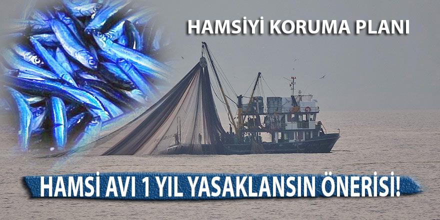 Hamsi avı 1 yıl yasaklansın önerisi!