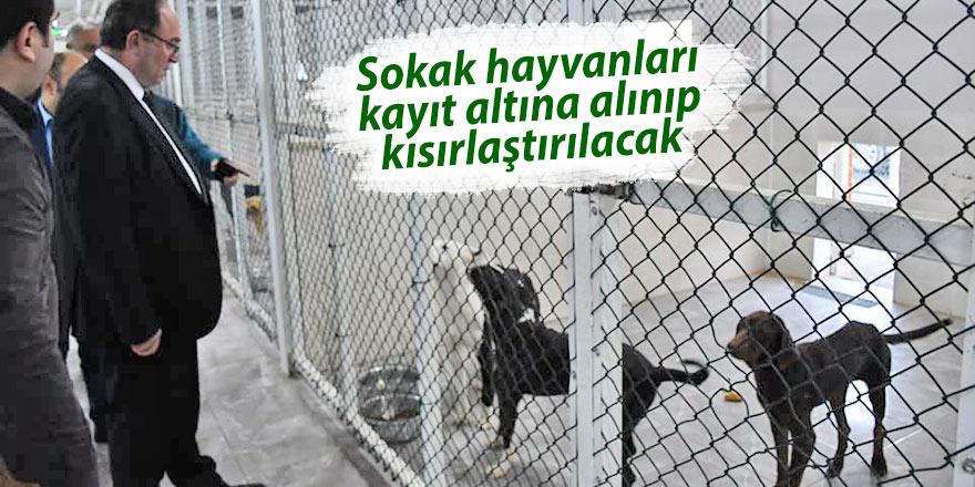 Sokak hayvanları kayıt altına alınıp kısırlaştırılacak
