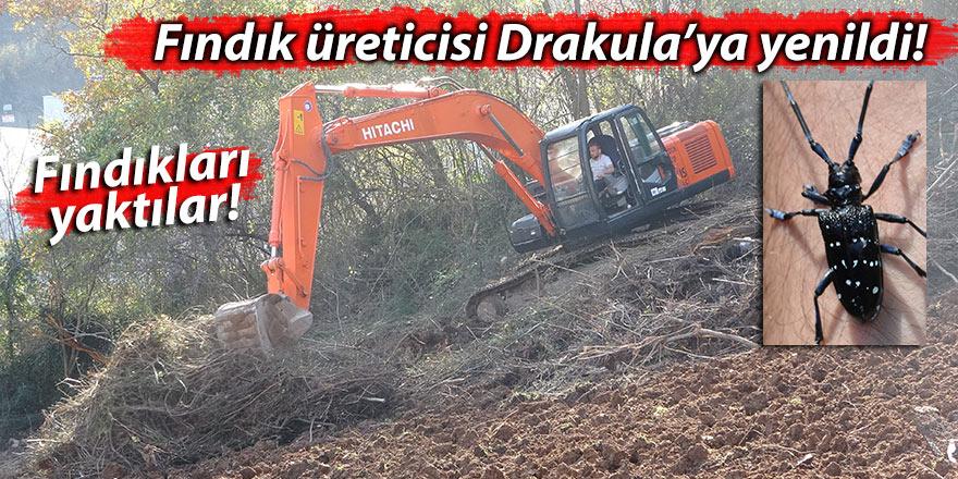 Fındık üreticisi Drakula'ya yenildi! Fındıkları yaktılar!