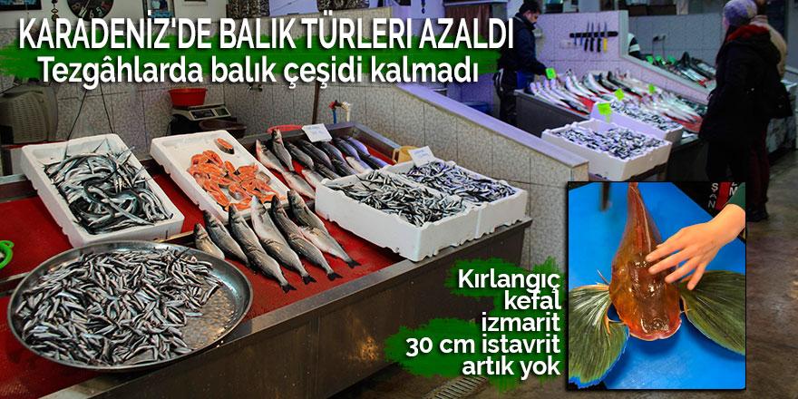 Karadeniz'de balık türleri azaldı