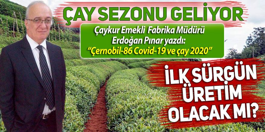 Çay sezonu geliyor. İlk sürgün üretim olacak mı?