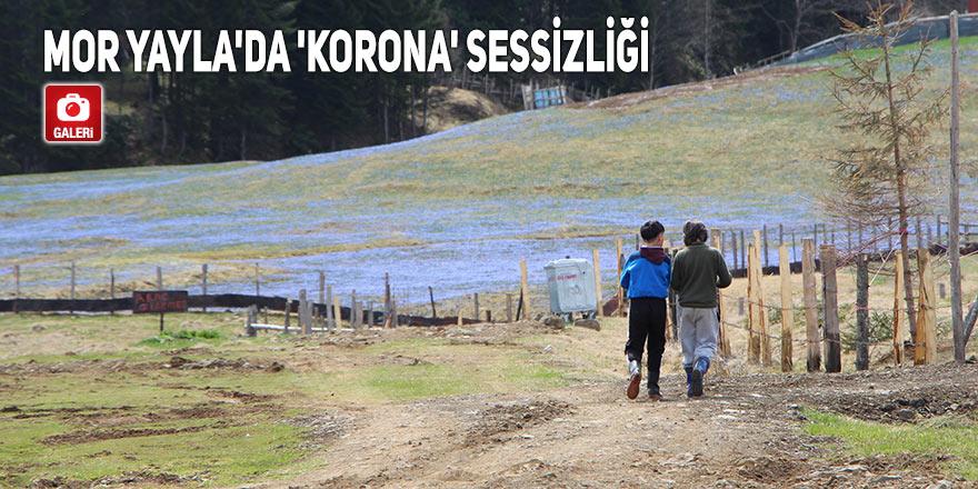 Mor Yayla'da 'Korona' sessizliği