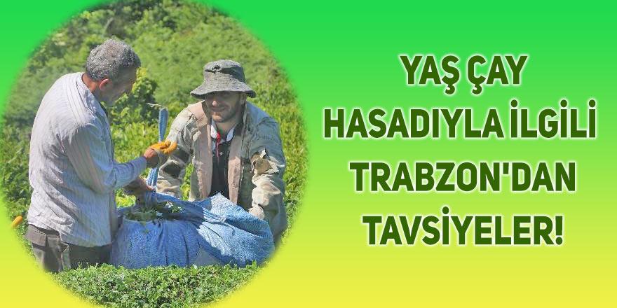 Yaş çay hasadıyla ilgili Trabzon'dan tavsiyeler!