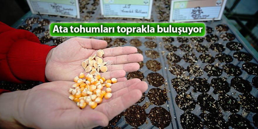 Ata tohumları toprakla buluşuyor