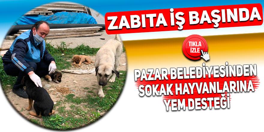 Pazar Belediyesinden sokak hayvanlarına yem desteği