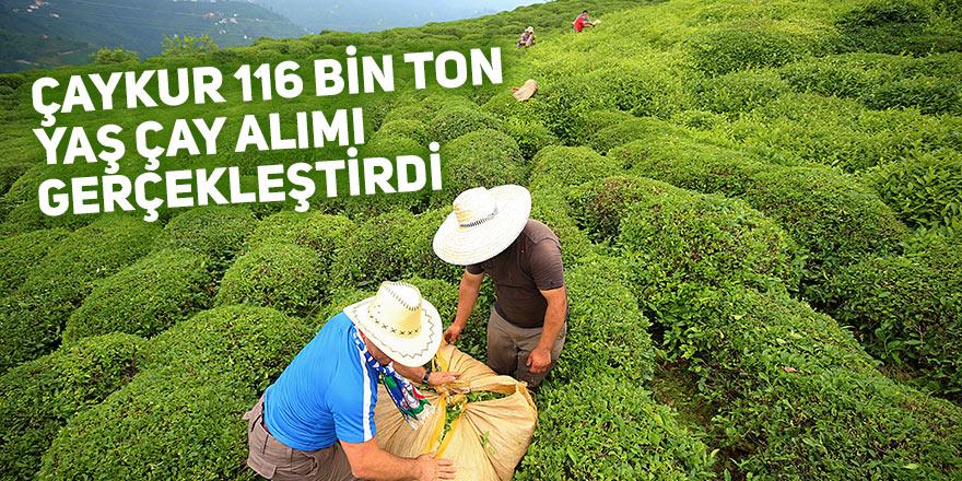 ÇAYKUR 116 bin ton yaş çay alımı gerçekleştirdi