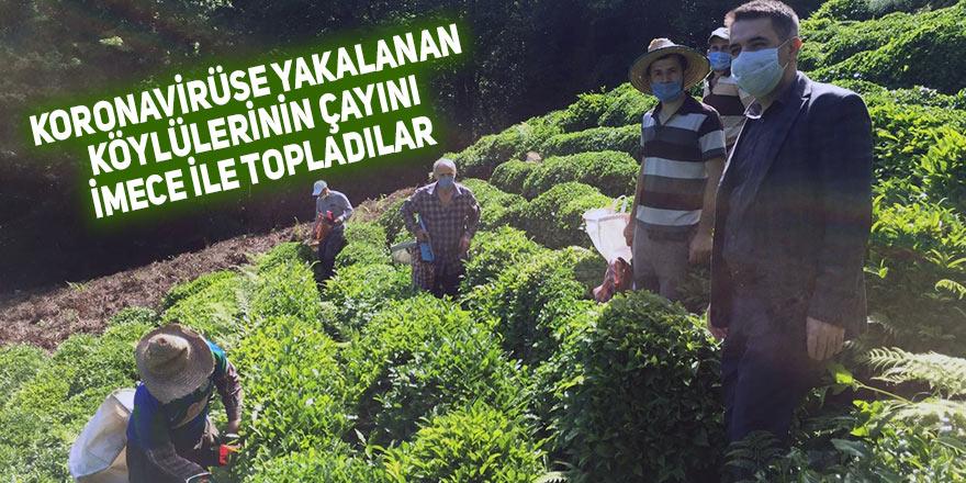 Korona virüse yakalanan köylülerinin çayını imece ile topladılar