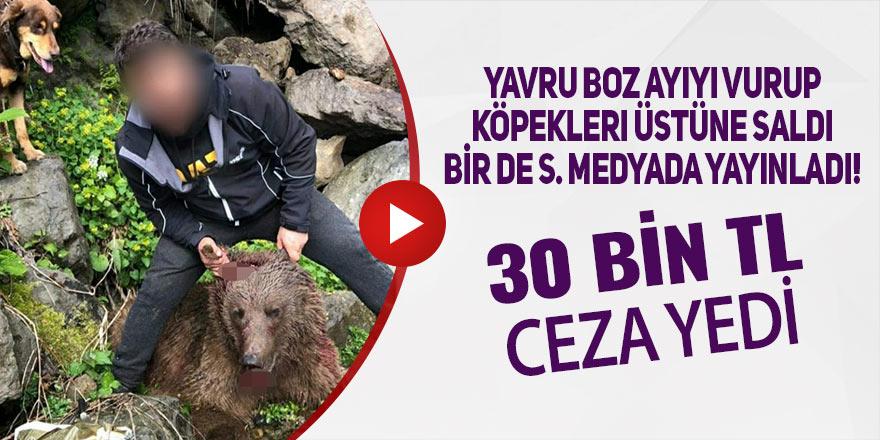 Yavru boz ayıyı vuran şahsa 30 bin 608 TL para cezası verildi