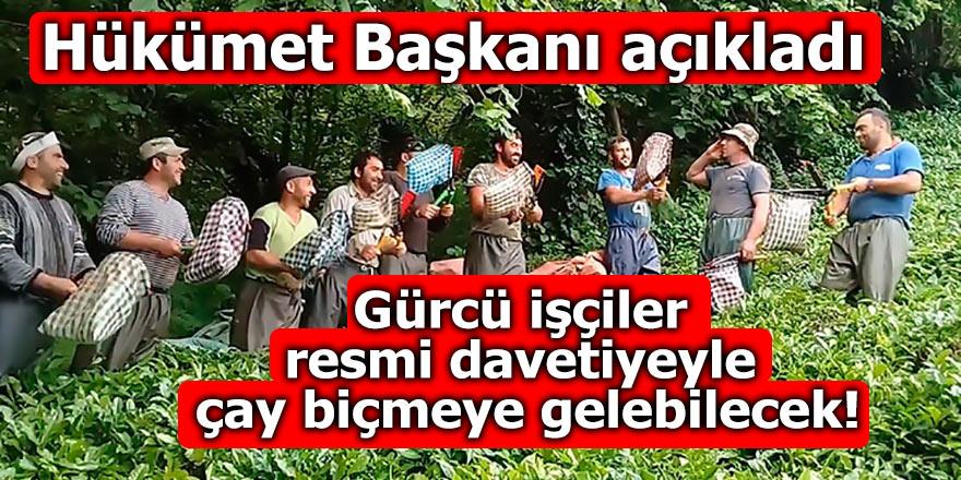 Gürcü işçiler resmi davetiye ile çay biçmeye gelebilecek!