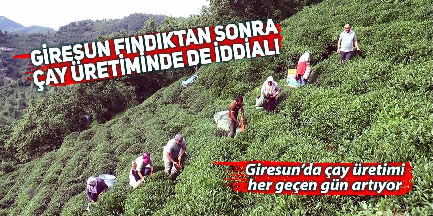 Giresun fındıktan sonra çay üretiminde de iddialı