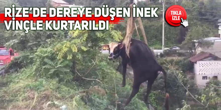 Rize'de dereye düşen inek vinçle kurtarıldı
