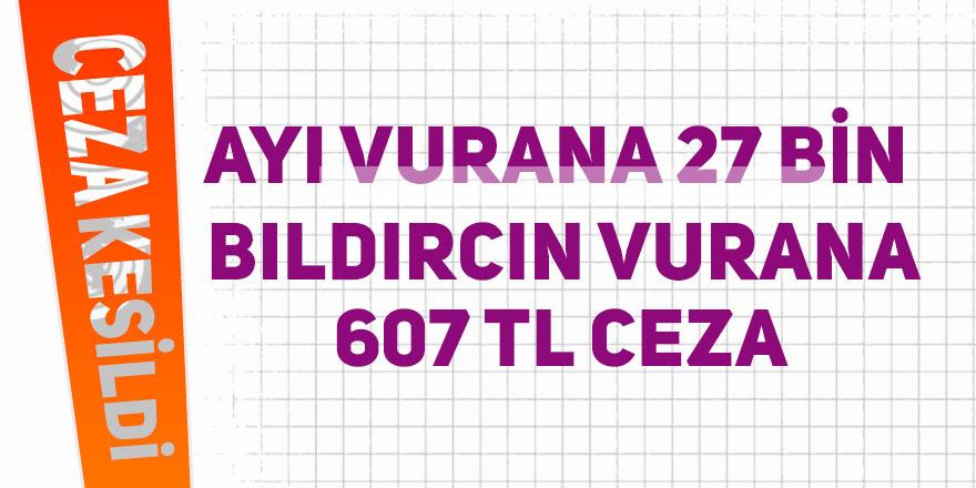 Ayı vurana 27 bin, bıldırcın vurana607 TL ceza
