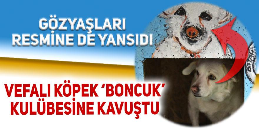 Vefalı köpek 'Boncuk' kulübesine kavuştu