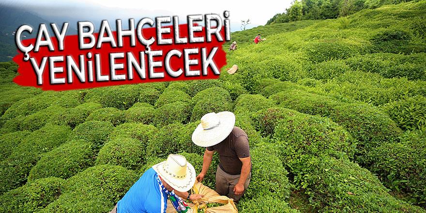 Çay bahçeleri yenilenecek
