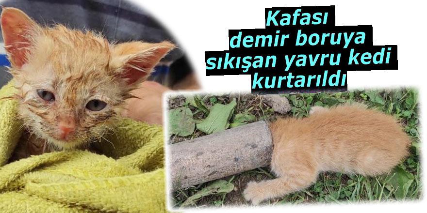Kafası demir boruya sıkışan yavru kedi kurtarıldı