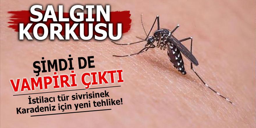 İstilacı tür sivrisinek Karadeniz için yeni tehlike!