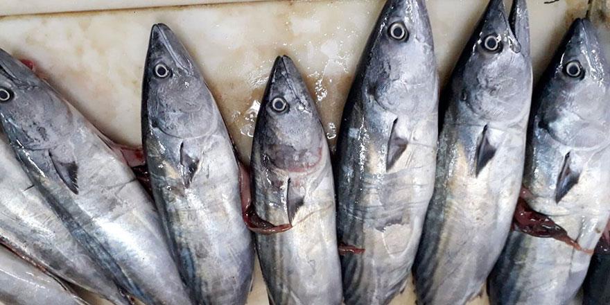 Balıkçılar palamudu bekliyor