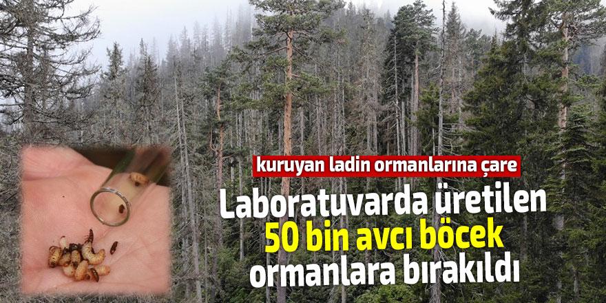 Laboratuvarda üretilen 50 bin avcı böcek ormanlara bırakıldı