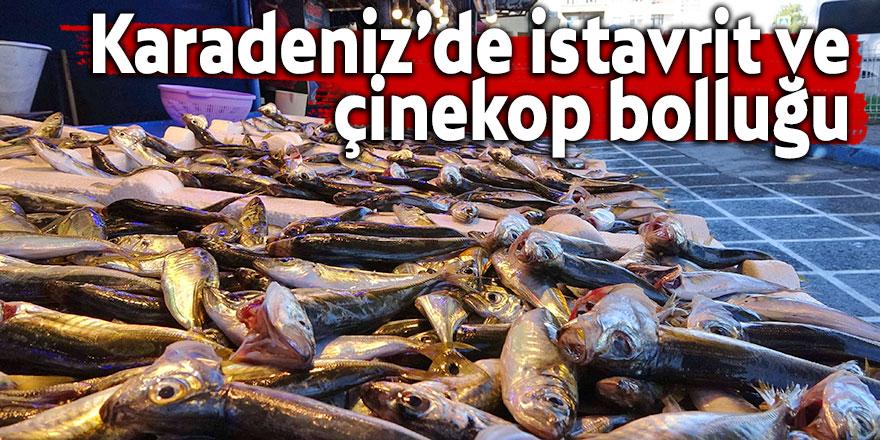 Karadeniz'de istavrit ve çinekop bolluğu