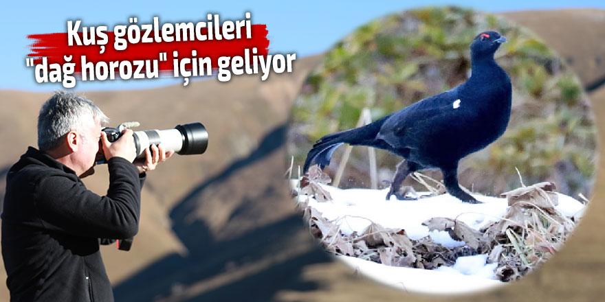 """Kuş gözlemcileri """"dağ horozu"""" için D. Karadeniz'e geliyor"""