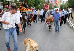 Trabzon'a renk katan şenlik