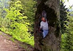 İkizdere ormanlarına koruma