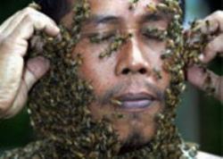 Arılar bilgisayardan çok daha hızlı