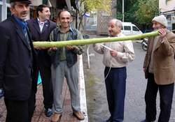 2 metrelik kabak şaşırttı!