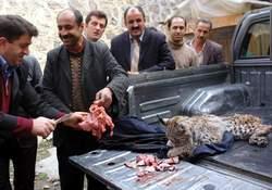 Vahşi hayvanlar parçaladı