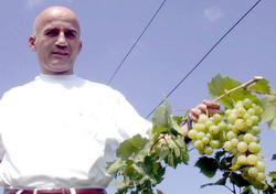 Karadeniz'de beyaz üzüm zamanı