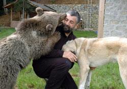 Cemal Gülas'ın ayısı büyüdü