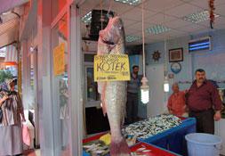 Dev kötek balığını böyle satıyorlar!