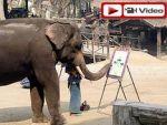 Bu fil doğuştan ressam!