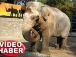 Çılgına dönen fil, 3 kişiyi öldürdü