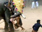 Fil bakıcısını dümdüz etti
