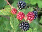 Kansere karşı en etkili meyve