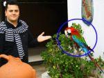 Trabzonspor fanatiği papağan!