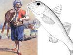 Karadeniz'de balık avcılığı tarihi